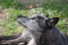 Zoo_Hannover_050914_copy_Heike_Weiler_IMG_6647