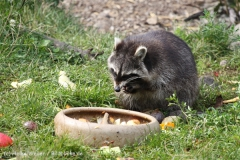 Zoo_Hannover_050914_copy_Heike_Weiler_IMG_6648