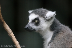 Zoo_Hannover_050914_copy_Heike_Weiler_IMG_6679