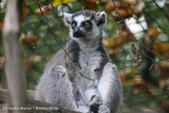 Zoo_Hannover_050914_copy_Heike_Weiler_IMG_6683
