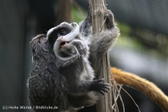 Zoo_Hannover_050914_copy_Heike_Weiler_IMG_6694