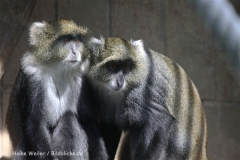 Zoo_Hannover_050914_copy_Heike_Weiler_IMG_6703