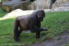 Zoo_Hannover_060614_IMG_9415