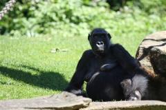 Zoo_Hannover_060614_IMG_9426