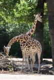 Zoo_Hannover_060614_IMG_9428