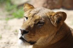 Zoo_Hannover_060614_IMG_9456