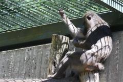 Zoo_Hannover_060614_IMG_9461