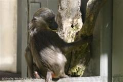 Zoo_Hannover_060614_IMG_9464