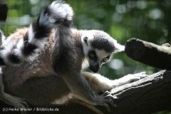 Zoo_Hannover_060614_IMG_9471