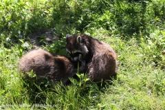 Zoo_Hannover_060614_IMG_9481