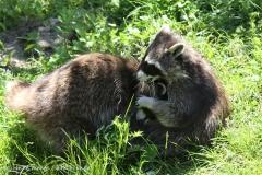 Zoo_Hannover_060614_IMG_9485