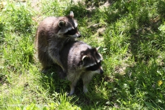 Zoo_Hannover_060614_IMG_9503