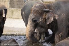 Zoo_Hannover_060812_IMG_1706