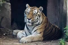 Zoo_Hannover_060812_IMG_1812