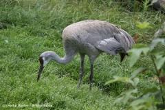 Zoo_Hannover_060812_IMG_1850