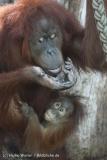 Zoo_Hannover_070314_IMG_6313