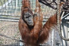 Zoo_Hannover_070314_IMG_6376