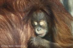 Zoo_Hannover_070314_IMG_6382