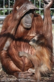 Zoo_Hannover_070314_IMG_6387