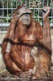 Zoo_Hannover_070314_IMG_6389