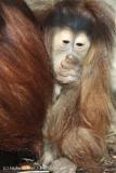 Zoo_Hannover_070314_IMG_6395