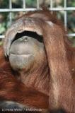 Zoo_Hannover_070314_IMG_6405
