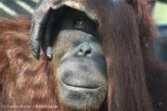 Zoo_Hannover_070314_IMG_6414