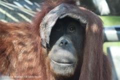 Zoo_Hannover_070314_IMG_6417
