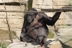 Zoo_Hannover_070314_IMG_6421