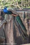 Zoo_Hannover_070314_IMG_6455