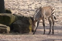 Zoo_Hannover_070314_IMG_6459