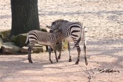 Zoo_Hannover_070314_IMG_6461