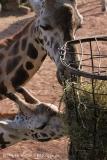 Zoo_Hannover_070314_IMG_6462