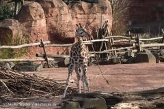 Zoo_Hannover_070314_IMG_6480