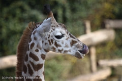 Zoo_Hannover_070314_IMG_6489