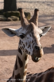 Zoo_Hannover_070314_IMG_6494