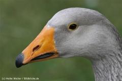 Zoo_Hannover_070912_IMG_2660-3
