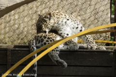 Zoo_Hannover_070912_IMG_2763-3