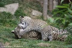 Zoo_Hannover_070912_IMG_2893