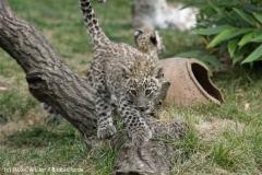 Zoo_Hannover_070912_IMG_2962