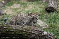Zoo_Hannover_070912_IMG_2973