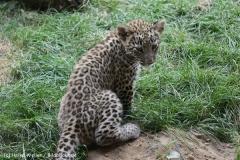 Zoo_Hannover_070912_IMG_3006