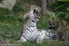 Zoo_Hannover_070912_IMG_3039