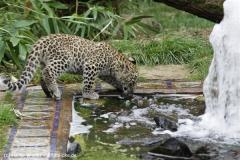 Zoo_Hannover_070912_IMG_3147