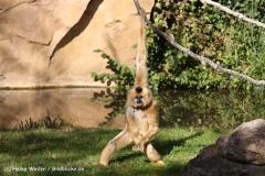 Zoo-Hannover-091009IMG_6548