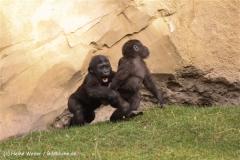 Zoo-Hannover-091009IMG_6586