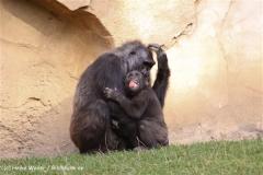 Zoo-Hannover-091009IMG_6619