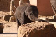 Zoo-Hannover-091009IMG_6645
