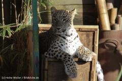 Zoo-Hannover-091009IMG_6658