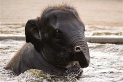 Zoo-Hannover-091009IMG_7260